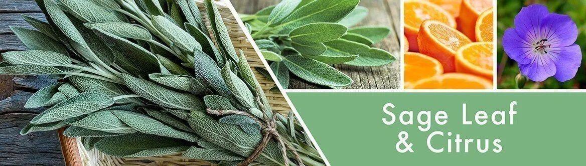 goose-creek-candle-sage-leaf-and-citrus-duftbeschreibung