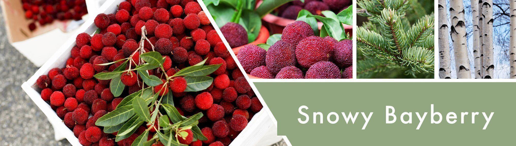 Snowy-Bayberry-Banner